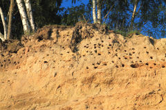 Bird's holes nests in slopes on the bank of the Baltic Sea in Kulikovo, Kaliningrad region. KULIKOVO, RUSSIA — JULY 19, 2014: Bird's holes nests in slopes on Stock Image