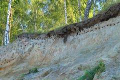 Bird's holes nests in slopes on the bank of the Baltic Sea in Kulikovo, Kaliningrad region Royalty Free Stock Photo