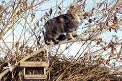 Bird's hunt in the tree Stock Photos