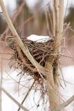Bird's nest stock photos