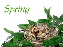 Bird`s nest. On white background Stock Photography