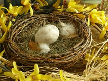 Bird's Nest. With egg and feathers in a spring theme Royalty Free Stock Images