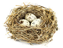 Bird's nest 2. Plant fragments constructed bird nest with eggs Royalty Free Stock Images