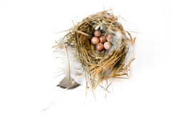 Bird's nest. A feather lined hummingbirds birds nest with eggs on a white background stock photo