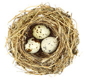 Bird's nest Royalty Free Stock Image
