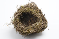 Bird\'s nest Royalty Free Stock Image