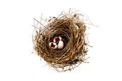 Bird's nest. By Black-Hard Art Studio Royalty Free Stock Photo