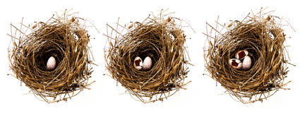 Bird's nest Stock Image