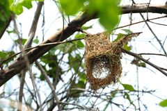 Bird's Nest Stock Photos