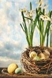 Bird's nest Royalty Free Stock Photo