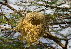 Bird's Nest Stock Photography