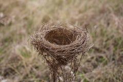 Bird& x27; s Nest Royalty-vrije Stock Afbeeldingen