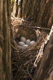 Bird's nest. With eggs stock photos