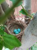 Bird& x27; s-Nest Lizenzfreie Stockfotos