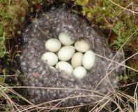 Bird's-nest stock photo