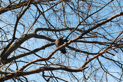 Bird`s nest on the bare tree Stock Images