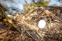 Bird`s nest Royalty Free Stock Photo