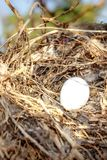 Bird`s nest stock photo