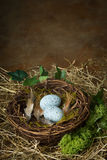 Bird's nest with blue eggs Stock Photo
