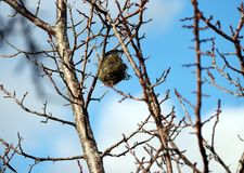 Bird`s nest on the branch of tree and blur sky background. royalty free stock image