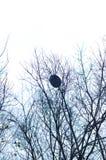Bird's nest Royalty Free Stock Photography