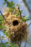 Bird's nest Stock Images