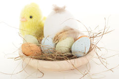 Bird's nest with chick Royalty Free Stock Photo