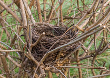 Bird`s nest close up Royalty Free Stock Image
