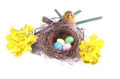 A bird's nest with colorful eggs and daffodils. Royalty Free Stock Image