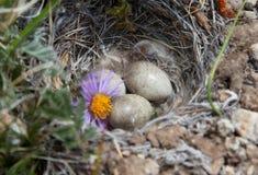 Bird's nest Royalty Free Stock Photos