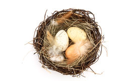 Bird's nest with easter eggs Stock Images