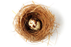 Bird's nest with egg in it Royalty Free Stock Image
