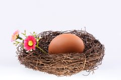 Bird's nest with an egg Royalty Free Stock Photo