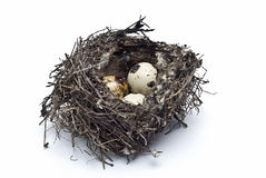 Bird's nest with eggs. Stock Photos