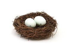 Bird's Nest with Eggs. A macro shot of a bird's nest with two eggs over a white background stock images