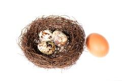Bird's nest with eggs Royalty Free Stock Photos