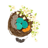 Bird`s nest with eggs and flowering branches. Stock Image
