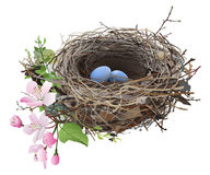 Bird's Nest with eggs. Hand drawn vector illustration of a bird's nest with a couple of blue eggs, surrounded by sprig flowers and green shoots, on white Royalty Free Stock Images