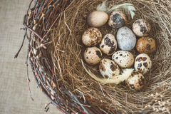 Bird's nest with eggs Royalty Free Stock Image