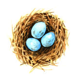 Bird's nest with eggs Royalty Free Stock Photo