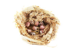 Bird's nest with eggs on white Stock Images