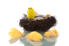 Bird's Nest with feathers Royalty Free Stock Image