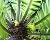 Bird's nest fern under sun light Stock Photos