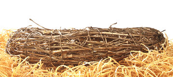 Bird's nest in front. Royalty Free Stock Photo