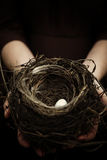 Bird's Nest Royalty Free Stock Image