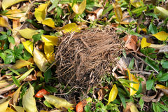 Bird's nest on Ground floor Royalty Free Stock Photography