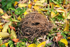 Bird's nest on Ground floor Stock Photos
