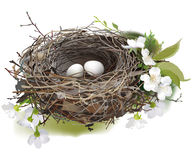 Bird`s Nest. Hand drawn vector illustration of a nest with two white eggs, surrounded by spring flowers and green shoots, on white background Stock Images