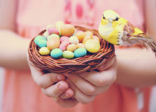 Bird's nest in the hands of. Bird sitting in a small basket on a pile of candies Royalty Free Stock Photos