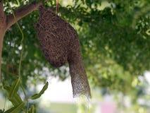 Bird's  nest Stock Images